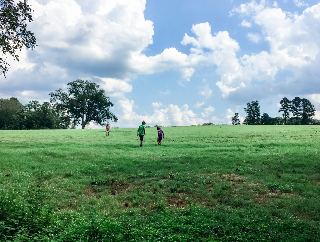 kids in pasture